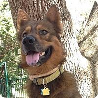 Adopt A Pet :: Tucker - Ocean Ridge, FL