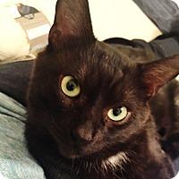 Adopt A Pet :: Austin Mini - Toronto, ON