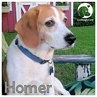 Adopt A Pet :: Homer - Chicago, IL