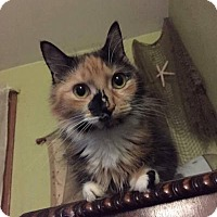 Adopt A Pet :: Gwendolyn - Staten Island, NY