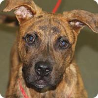 Adopt A Pet :: Issac - Greensboro, NC