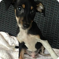 Adopt A Pet :: Neko - Hartford, CT