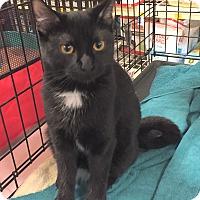 Adopt A Pet :: Daisy - Rochester, MN