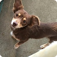 Adopt A Pet :: Tanner - adoption pending - Gig Harbor, WA