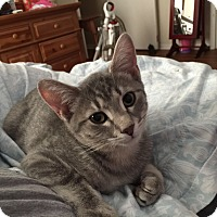 Adopt A Pet :: Axel - Marietta, GA