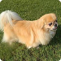 Adopt A Pet :: Zoey - Umatilla, FL