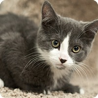 Adopt A Pet :: Piper - Great Falls, MT