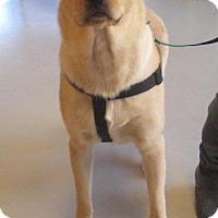 Adopt A Pet :: buddy - Johnson City, TN