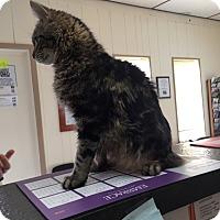 Adopt A Pet :: Sebastian - Mine Hill, NJ