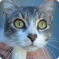 Adopt A Pet :: Darby - Menomonie, WI