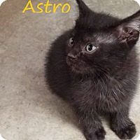 Adopt A Pet :: Astro - Knoxville, IA