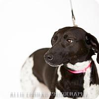 Adopt A Pet :: Freckles - Breinigsville, PA