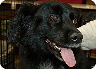 Spaniel (Unknown Type) Mix Dog for adoption in Richmond, Virginia - Pepper