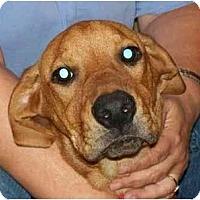 Adopt A Pet :: Rascal - kennebunkport, ME
