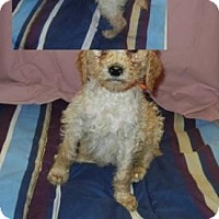 Adopt A Pet :: Georgie - Antioch, IL