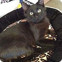 Adopt A Pet :: Chamberlain - Byron Center, MI