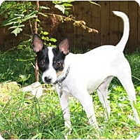 Adopt A Pet :: Stuey - Nashville, TN