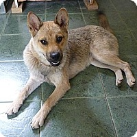 Adopt A Pet :: KHAKI - Paron, AR
