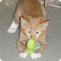 Adopt A Pet :: Gallagher - Portland, OR