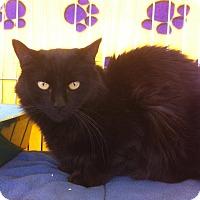 Adopt A Pet :: Son L - Sacramento, CA
