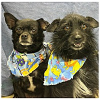 Adopt A Pet :: Chico & Oreo - Forked River, NJ