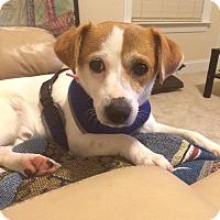 Adopt A Pet :: Roy - Raleigh, NC