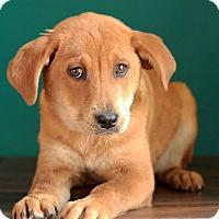 Adopt A Pet :: Betsy - Waldorf, MD