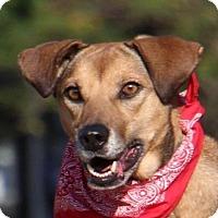 Adopt A Pet :: Sahara - San Francisco, CA