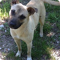 Adopt A Pet :: Tanner - Hagerstown, MD