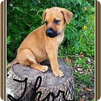 Adopt A Pet :: Thor - Leming, TX