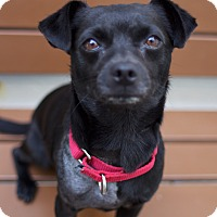 Adopt A Pet :: Coco - Los Angeles, CA