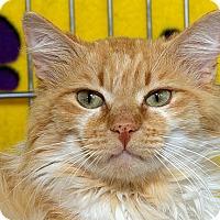 Adopt A Pet :: Festus M - Sacramento, CA