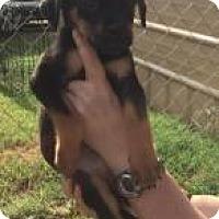 Adopt A Pet :: Lanee - Rexford, NY