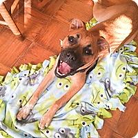 Adopt A Pet :: Axel - Wilmington, NC
