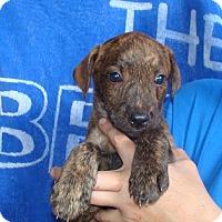 Adopt A Pet :: Emerald - Oviedo, FL
