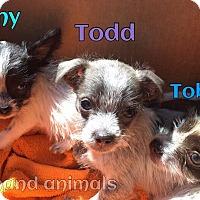 Adopt A Pet :: Todd - Rosamond, CA