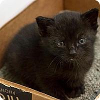 Adopt A Pet :: Onyx - Bronx, NY