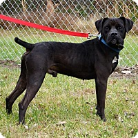 Adopt A Pet :: Bear - DuQuoin, IL
