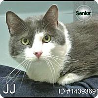 Adopt A Pet :: JJ - Irving, TX
