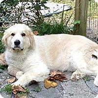 Adopt A Pet :: ANGEL - Wayne, NJ
