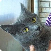 Adopt A Pet :: Gracie - Pensacola, FL