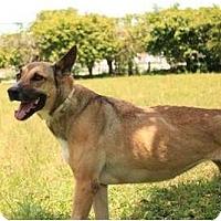 Adopt A Pet :: Athena - Key Biscayne, FL