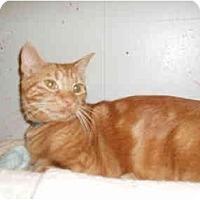 Adopt A Pet :: Tuscon - Hamburg, NY