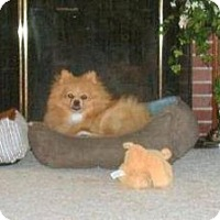 Adopt A Pet :: McGarrett - Youngstown, OH