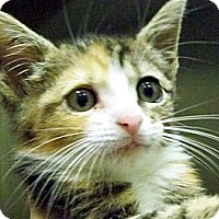 Adopt A Pet :: Minnie - Secaucus, NJ
