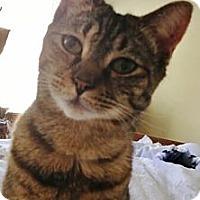 Adopt A Pet :: Sarah - Reston, VA
