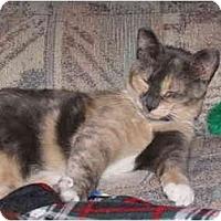 Adopt A Pet :: Callie Muffin - Orlando, FL