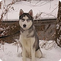 Adopt A Pet :: Hagen - Belleville, MI