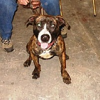 Adopt A Pet :: DASH-WANTS TO PLEASE - Amherst, OH