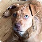 Adopt A Pet :: Arya